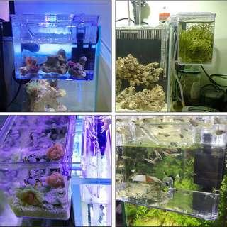 Breeder Box external hang on back or front guppy betta shrimp fry quarantine