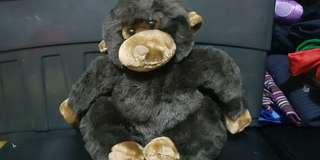 Dark brown ape