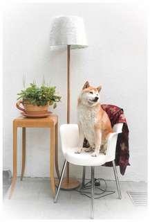 意大利製設計師椅子