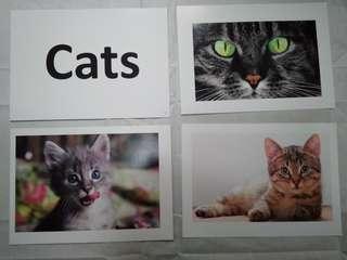 Cats Story Flashcards - Glenn Doman and Shichida