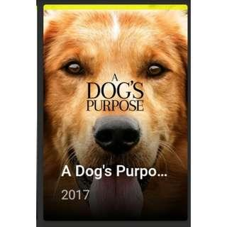 A Dog's Purpose - Readily Available
