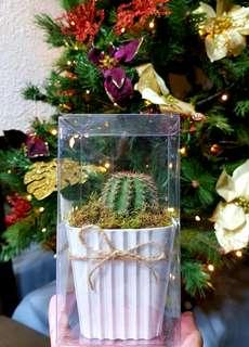 Real cactus gifts or giveaways