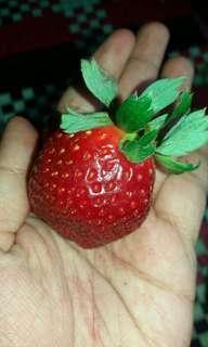 Permen strawberry / candies