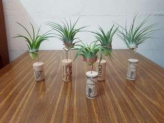 Plant, desktop plant,