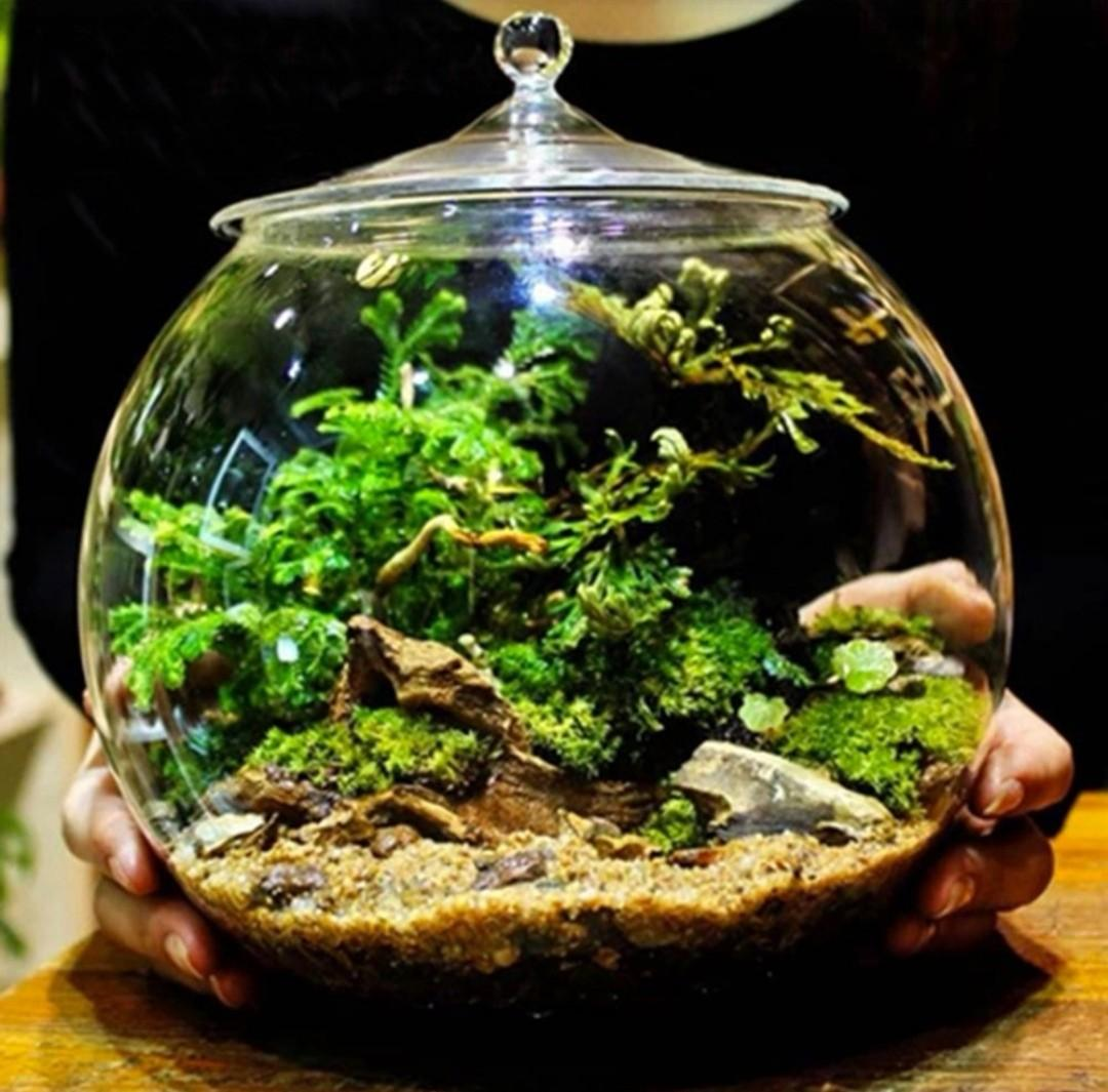 Glass Terrarium Round With Cover Gardening Gardening Tools Ornaments On Carousell