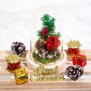 Small Christmas Preserved Flower Dome