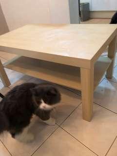 Ikea Lack Coffee table (Used)