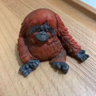 紅毛猩猩 睡覺 zoo 扭蛋