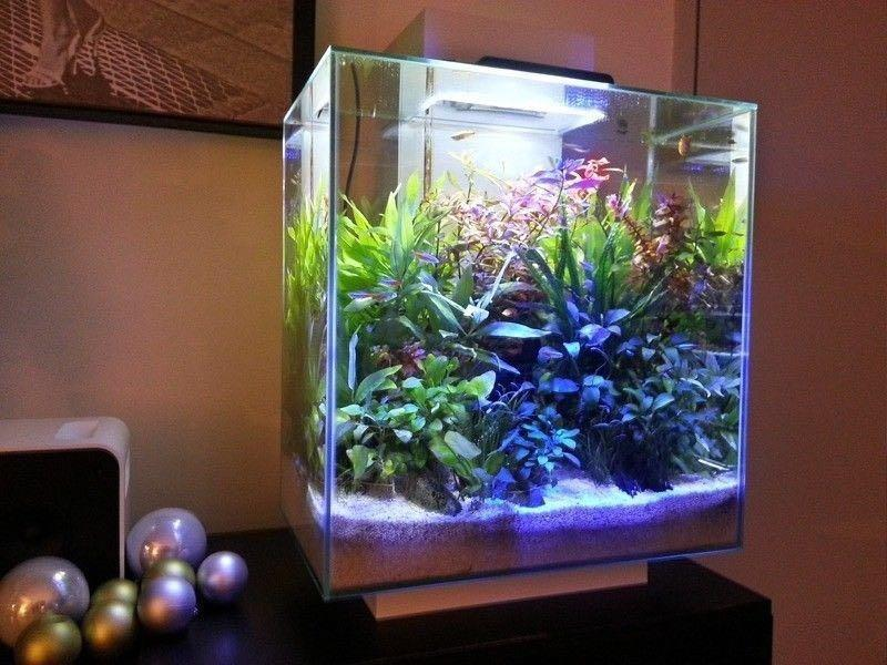 Fluval Edge 46l Aquascape