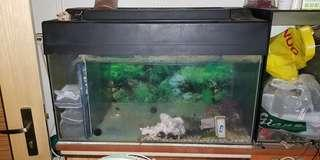 Used 3Ft IOS Fish Tank with Top cover