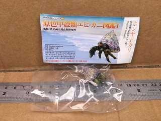 原色甲殼類圖鑑I: Blueband Hermit Crab