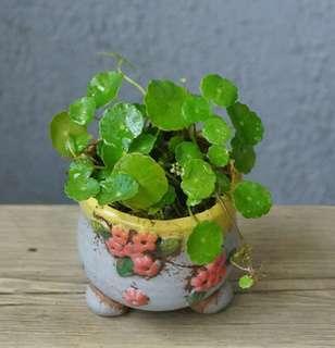 銅錢草 連盆 14cm(H) 泥種 室內室外 易種 plants 盆栽