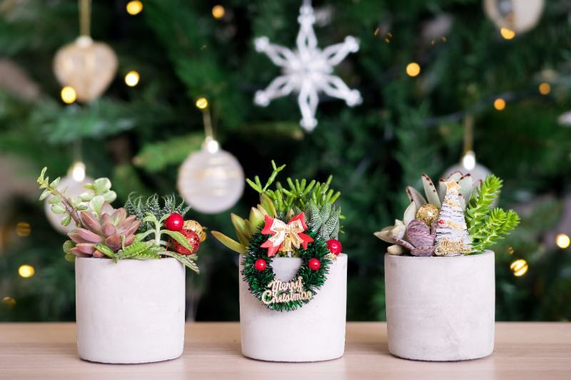 Christmas Succulent Decor.Succulent Christmas Gifts Furniture Home Decor Others On