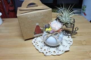 🚚 永生花/乾燥花小花盆-s(含聖誕禮盒)