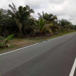 Tanah Sawit di Parit Wak Jabir berhampiran Toll Simpang Rengam