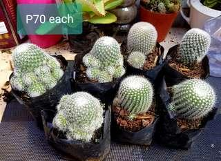 Cactus and succulemts