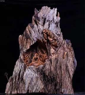 Yabai Damo wood sculpture 70x50x85