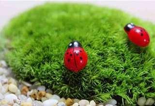 Terrarium Accessories / Terrarium Lady Bug / Miniature Lady Bug