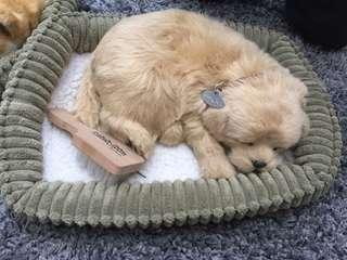 🚚 Perfect Petzzz 會呼吸的狗狗 玩具