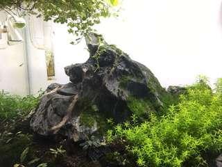 Large and rare seiryu rock / grey rock
