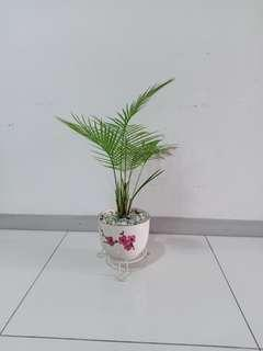 Palm in ceramic