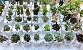 Cactus and Succulent Plants for sale