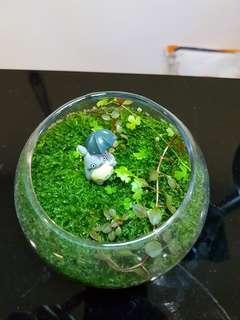 Moss terrarium,  moss garden , mini indoor garden