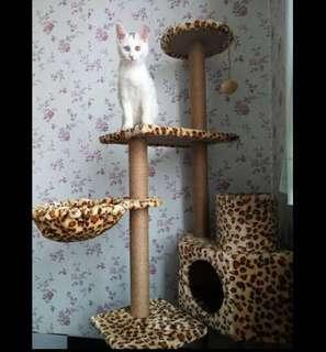 (New!) plush leopard print tall cat scratch tree house bed