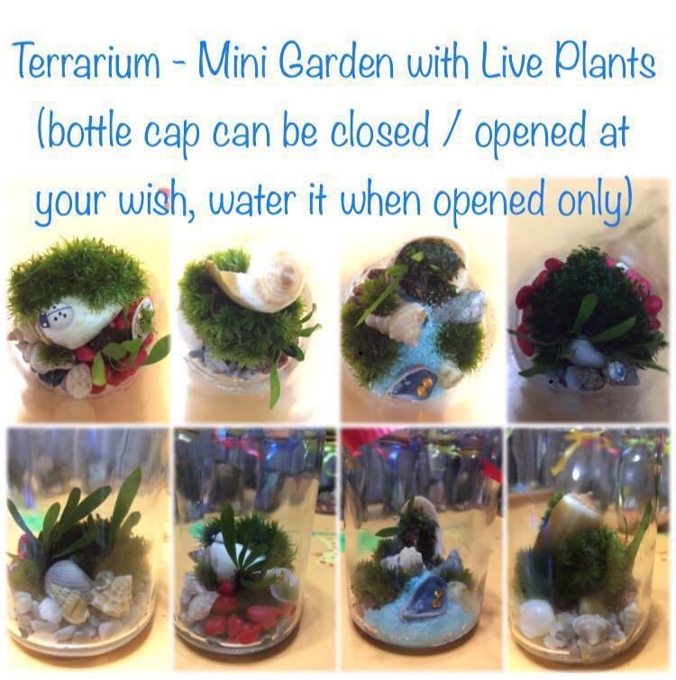 Moss Terrarium Gardening Plants On Carousell