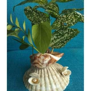 SEASHELL planter with GENUINE PEARLS