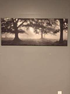 REDUCED PRICE!!! Forest Canvas Picture