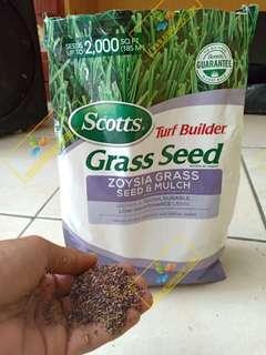 Benih Rumput Zoysia Scotts Grass