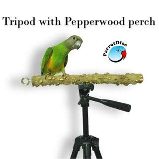 🚚 Bird Parrot Tripod stand with Pepperwood perch