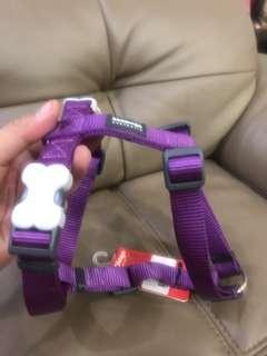 RedDingo purple Harness