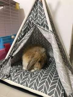 Pet tent with cushion pad