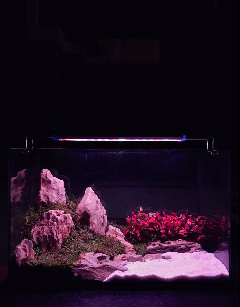 ec13a12a9 Fish Tank [Sold], Pet Supplies, For Fish, Fish Tanks on Carousell