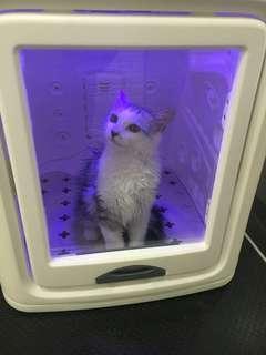 Exclusive Cats Grooming