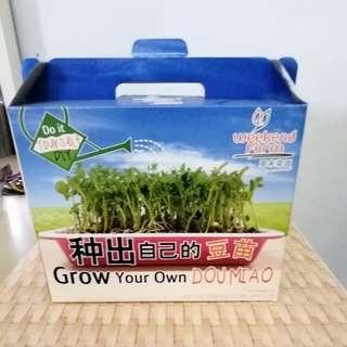 Grow your own dou miao DIY home garden farm