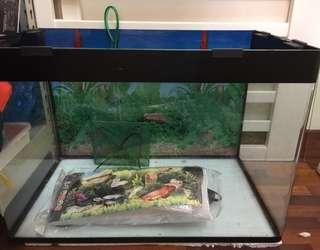 Fish Tank and glass on top