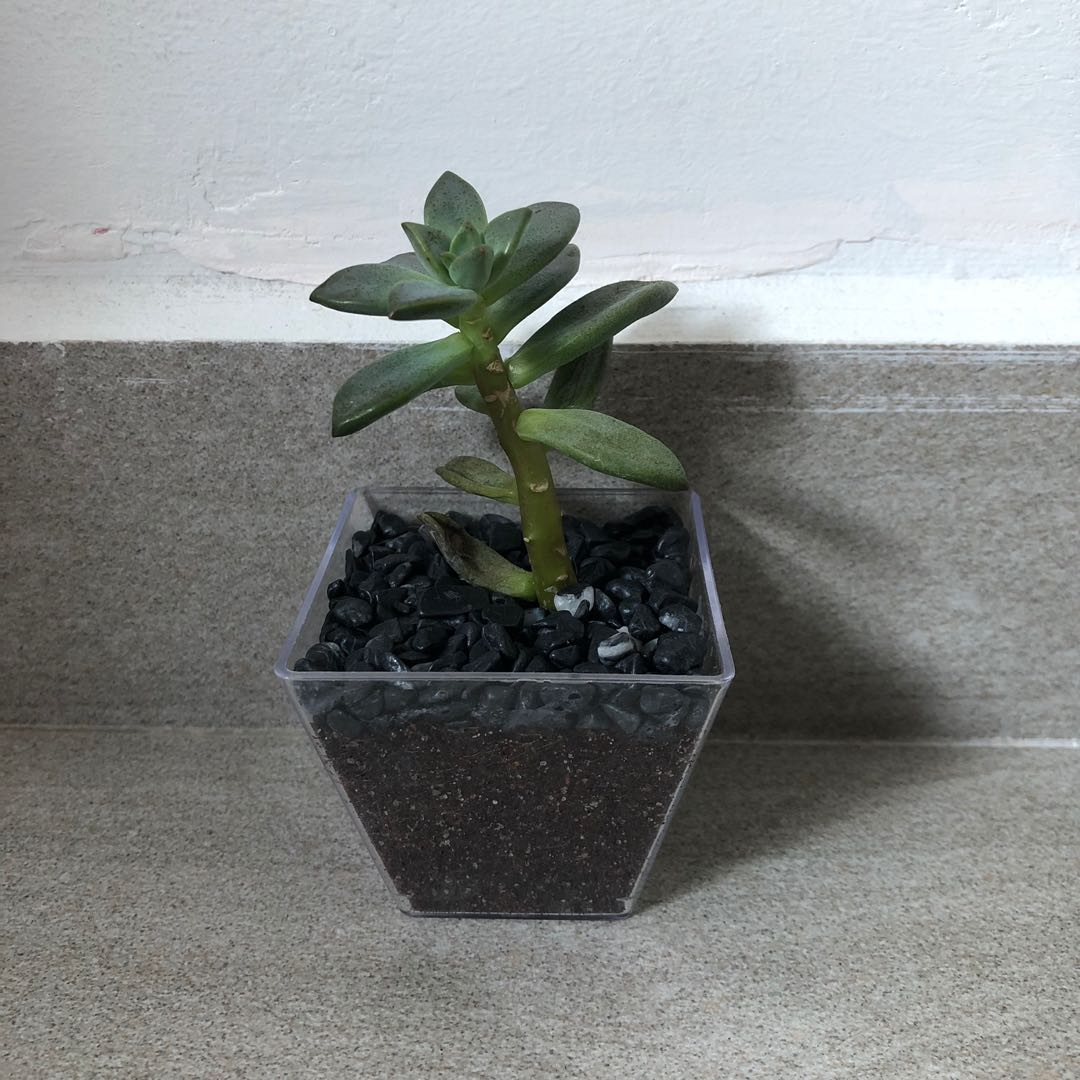 Succulent Terrarium T11 Gardening Plants On Carousell