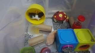 Hamster Boarding Pet House