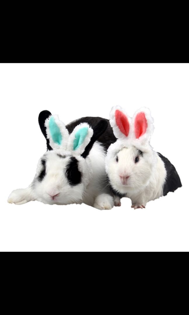 Animal pet hat rabbit/small animals/ small dogs or cats