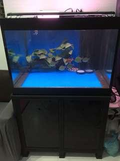 Custom made 3x3x2ft fish tank