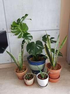 Assortment of Indoor Plants