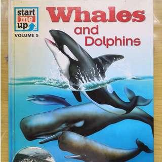 🚚 Whales and Dolphins