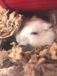 Hamster FAQ