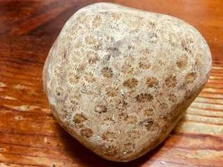 珊瑚玉,菊花玉,珊瑚玉原石