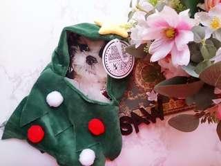 日本 貓狗 寵物服 聖誕樹 星星衫