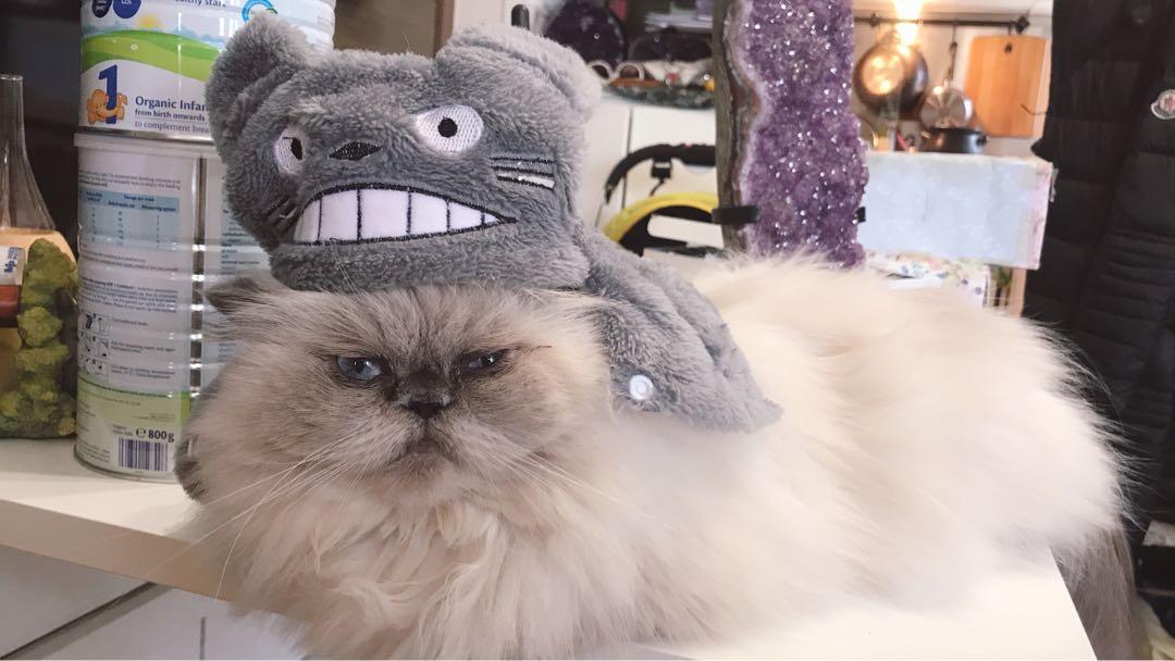 龍貓 貓仔衫