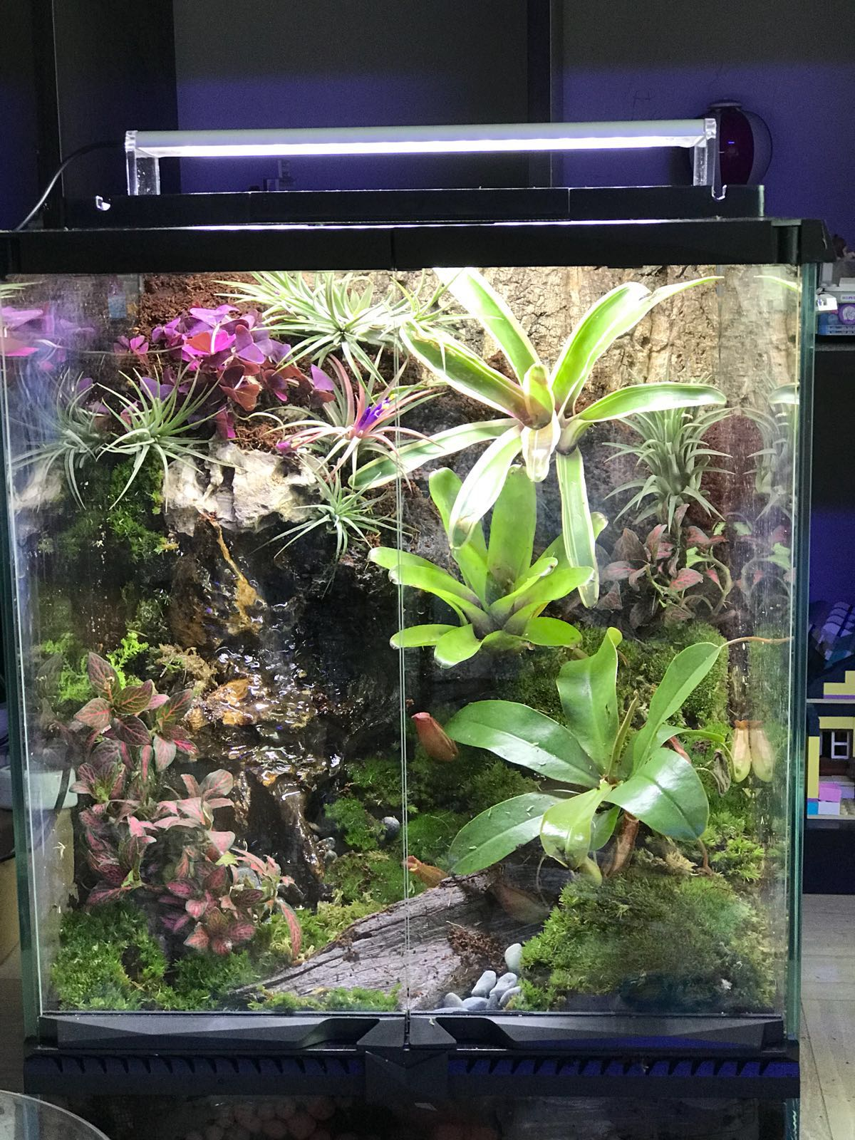 Natural Vivarium With Working Waterfall Everything Needed Included